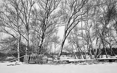 Winter (macplatti) Tags: winter schnee snow koblach vorarlberg austria aut wood frost wind forest