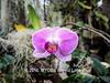 Duke Farms orchids-4142064-2 (myobb (David Lopes)) Tags: dukefarms hillsborough nj newjersey flower nature orchids olympus em1 omd