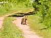 Duke Farms-6142710-2 (myobb (David Lopes)) Tags: dukefarms hillsborough nj newjersey nature olympus em1 omd