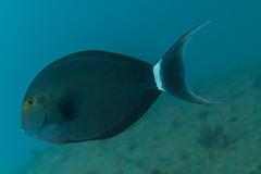 _MG_7285 (Stig Sarre) Tags: thistlegorm red sea redsea egypt scuba diving scubadiving dykking wreck vrak
