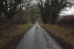 Country Road Vanishing Point [29/365 2017] (steven.kemp) Tags: norfolk countryside road wet rain tree winter vanishing point perspective country lane weston longville ringland outdoors