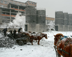 It's Grim Up North! (Kingmoor Klickr) Tags: beichang washery chengzihe jixi miningbureau china heilongjiang province working ponies pony horses animals industry