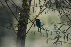 DSC_7800.jpg (ManuelSilveira) Tags: aves fauna guardarios
