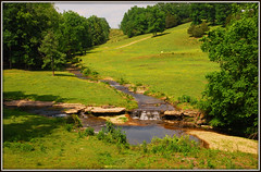 This Looks Like A Nice Picnic Spot (Jerry Jaynes) Tags: trees water grass manchester rocks tn cows farm tennessee farmland pasture waterfalls streams farmanimals tripodphotography nikkor1685vr nd8xfilter manchestertnmemorialdayweekend2015 tnmemorialdayweekend2015
