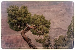 Grand Canyon (Felix Vila) Tags: park arizona usa tree america landscape nationalpark desert grandcanyon soutwest wildwest cannyon coloradoplateau