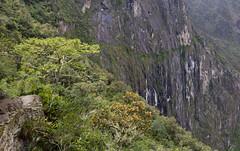 Trail to the Inca drawbridge, Machu Picchu, Peru (maxunterwegs) Tags: cliff peru cuzco trail machupicchu sentier senda weg trilha prou