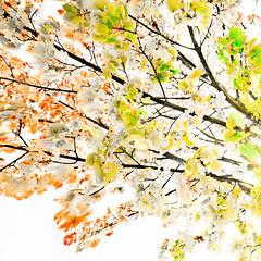 Autumn IV (wide-angle.de) Tags: digital germany de top500 treesi y201212 y201212treestop500
