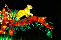 China light Zoo Antwerp 2016 (1st series) (jackfre 2 (deleting, erasing mute contacts)) Tags: belgium antwerp chinalightfestival zoo zooantwerp handicraft tradition chinese lights mythicaldragons gracefulbirds animal flowers lanterns vases