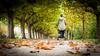 (maximilianbraun1) Tags: lumix leica baby bäume herbst spaziergang mama kinderwagen natur allee