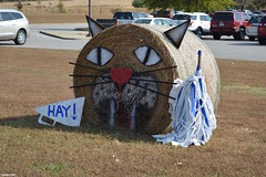 """""""HAY!"""" (Jake (Studio 9265)) Tags: hay bale art creative display artwork country rural usa united states america todd county ky kentucky fall 2016 wildcats animal sports"""