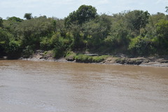 Maasai Mara National Reserve Kenya (tilfo) Tags: masai mara maasaimara marariver