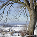belgium 129 (beauty of all things) Tags: belgien belgium henrichapelle kelmis bäume trees