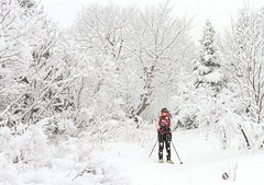 Snowshoeing (Karen_Chappell) Tags: people person winter january pippypark snow snowy snowing snowshoeing stjohns newfoundland canada atlanticcanada avalonpeninsula nfld scenery landscape scenic trees white pink weather cold