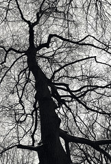 Tree - monocrome (Andreas Mezger - Art Photography) Tags: tree wood forest black white many branches detailed tectures nikon bavaria munich