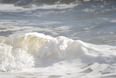 DSC_0131 (sarahk5446) Tags: gulfofmexico gulfcoast water waves wildlife gulfshores ocean orangebeach outside nautical nikon natural nature sand summer spring sea sky swim surf sun seashore alabama adventure america floridastateparks florida