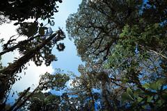 007_IMG_8280 (Sandra González Osorio) Tags: naturaleza nature plant planta