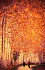 Remembering (jocsdellum) Tags: otoño tardor autumn records remember càlid cálido warm sweet pareja parella couple elfactorhumà thehumanfactor