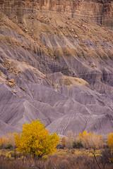 DSC_2189_E74_FALL in CENTRAL UTAH (antelope reflection) Tags: fall autumn utah capitolreelnationalpark mountain rock colors yellow nikond90