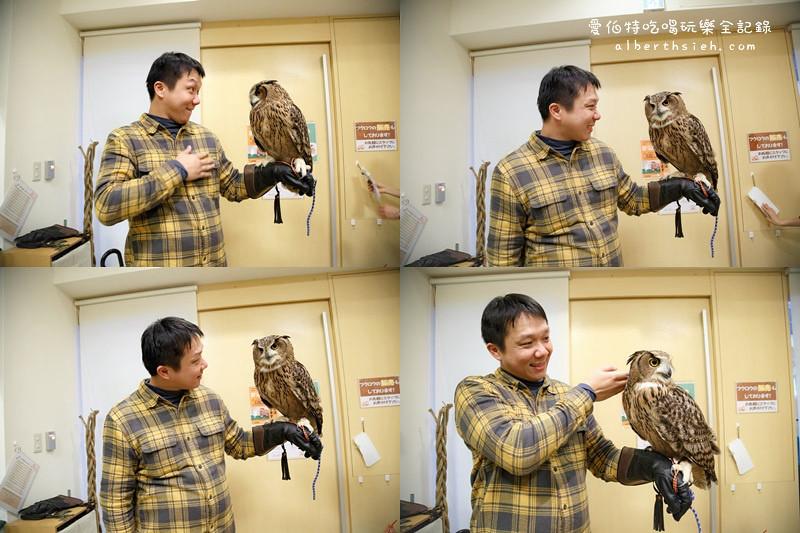 福岡必去.OWL Family 貓頭鷹咖啡廳