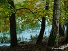 .. in the forest (Yoma29) Tags: wald forest natur nature fliegenpilz mushroom