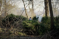 Scrub Clearance in West Wood (Alan @ Houghton Regis News Desk) Tags: houghton hall park regis bedfordshire