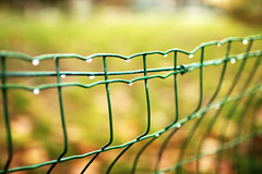 fence (Katrinitsa) Tags: winter paris france light city cityoflight amour love colors cityscape europe nature landscape mirror reflections reflection bokeh focus zoom green black white bright sunlight rain droplet water plant plants trees tree lake blonde seine river canon canoneosrebelt3i ef35mmf14lusm gardens park parc morning amazing beauty beautiful awesome dream dreamy monceau drops dreamer travel travelphotography art artistic canoneos600d ef24mmf14lusm postcard imagination inspiration