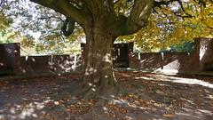 20151025_124358 (Al the photo man) Tags: tree atumn nature castle netherlands nederlands holland dutch leaves