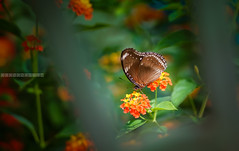 Nature... (tuanduongtt8018) Tags: flowers fly vietnam