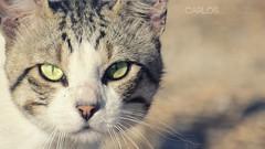 Felino (Carlos Tur Mong) Tags: nature up animal closeup cat eyes close ibiza