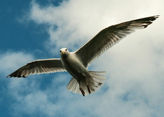Flying (Jbul06) Tags: blue ireland sea sky howth white bird clouds freedom fly flying wings seagull capture