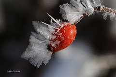 8346   Winter Ostalb (Canonklick) Tags: canon 6d macro 100mm winter eis ostalb