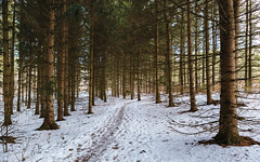 Let's Take A Walk (John Westrock) Tags: nature forest winter snow wisconsin midwest trees trail path iceagetrail waukesha canoneos5dmarkiii canonef2470mmf28lusm