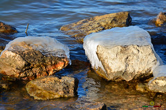 A-LUR_5606 (ornessina) Tags: trasimeno umbria byrd uccelli aironi cormorani toscana va orcia