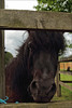 Squiggy (meniscuslens) Tags: horse trust rescue pony rehome buckinghamshire charity