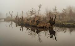 A forest too (Jorden Esser) Tags: s bridge fog pollards reflection roadsign trees upsidedown water woods