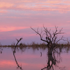2016.11.18.05.16.16-Dawn on Lake Menindee (www.davidmolloyphotography.com) Tags: newsouthwales darlingriver menindee kinchega kincheganationalpark lakemenindee dawn lake
