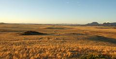 DSC03027 - NAMIBIA 2010