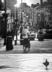 Pedestrian Zone - No Flying (foggyray90) Tags: streetscene contrejour cyclist pigeon wetstreet theriveroflife merseyside warrington