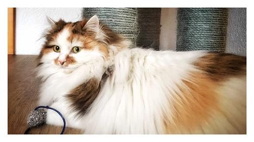 Kira mit langen Haaren