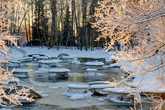 A beautiful winter afternoon (Lena_CS) Tags: tree branches light water river finland
