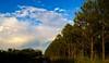 Au bout du chemin.... Trees... (Isa****) Tags: arbres pins cerisiers arcenciel céret