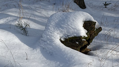 Old and young (Michal Hajek) Tags: d5500 18140mm nikon czphoto czechrepublic snow nature