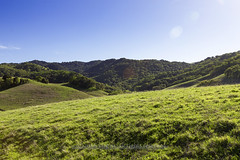 IMG_1189 Briones (virgmos) Tags: landscape rollinghills clearsky bluesky ebparksok briones canon outdoors nature greengrass flare