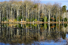 Winter Flora (Tim Pohlhaus) Tags: wetland chesapeake bay winterfoliage trees water landscape north point state park baltimore county maryland