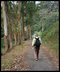 PWD colony Valparai (Indianature st2i) Tags: valparai anamalais anamallais tamilnadu westernghats tea teaestate wildlife indianature india nature 2016 2017