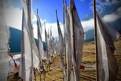 Yumthang (atulgoyalmaverick) Tags: northeastindia sikkim northsikkim yumthang yumthangvalley prayerflags valley