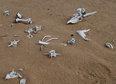 Oryx remains