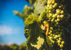 (marcoemme182) Tags: beauty canon sigma happiness explore grape 6d