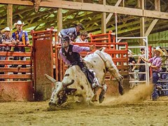 dsc_0391 t sm (Photos by Kathy) Tags: bull rodeo bullriding bullfighters foxhollowrodeo