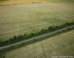 Minor Roman Road (->>Hamish) Tags: archaeology wheat kap archaeological oxfordshire kiteaerialphotography cropmarks asthall cropmark july2015